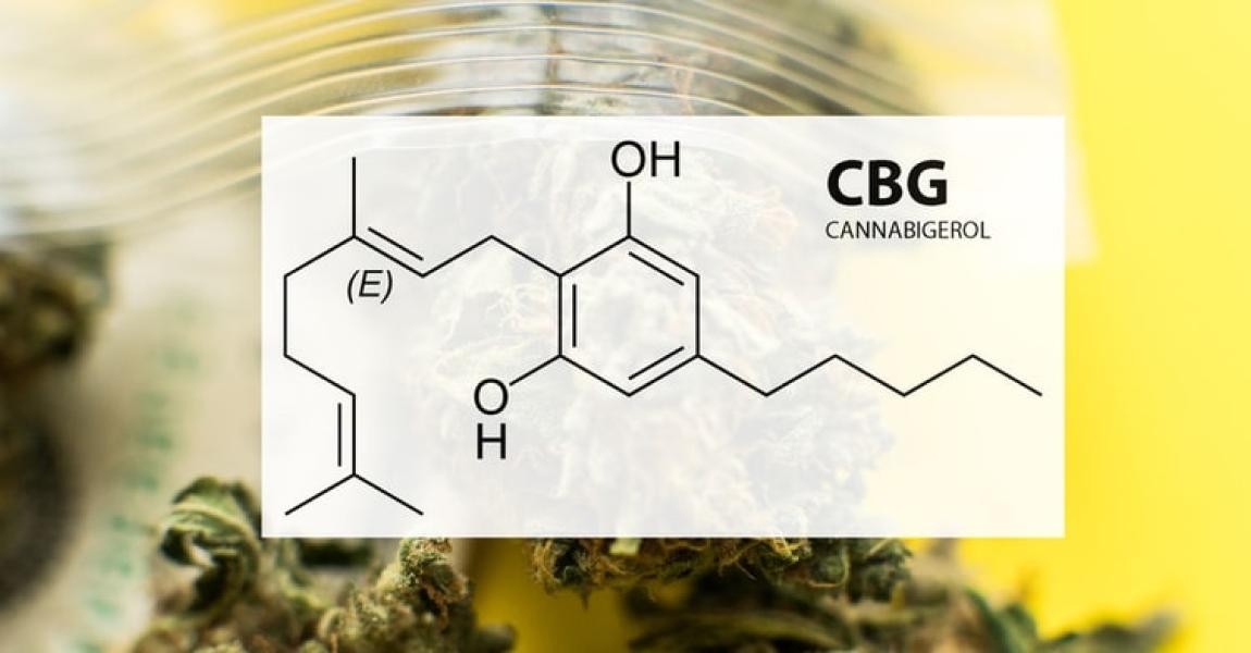 治癒効果もある大麻のCBGについて知っておくべきこと!