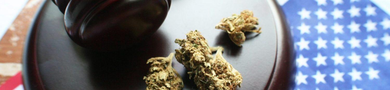 カリフォルニア 大麻 犯罪歴