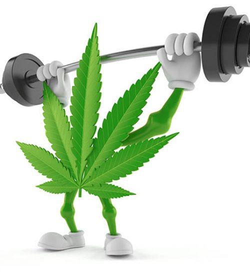 大麻の運動