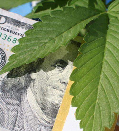 大麻 売上