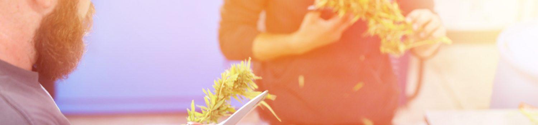 大麻の仕事