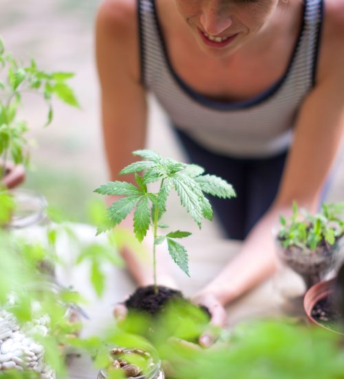 Woman Holding Marijuana Plant
