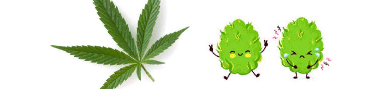大麻 不安
