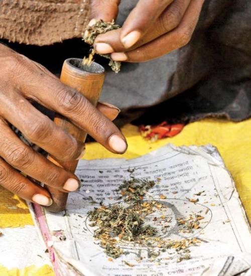 インド、パキスタン 大麻