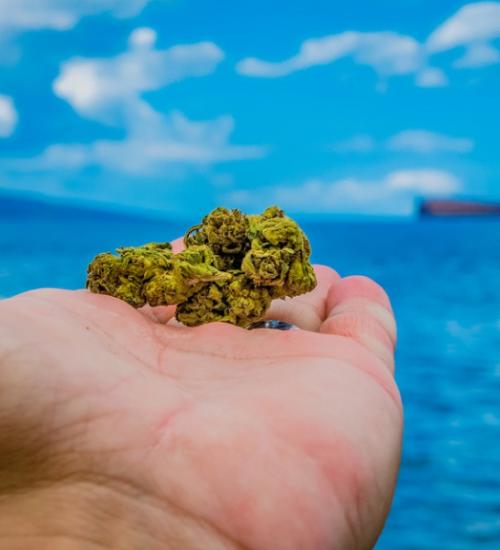 グアムと大麻