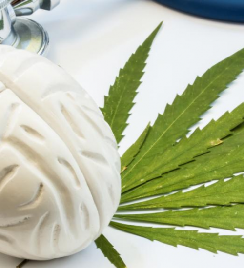 脳と大麻の研究