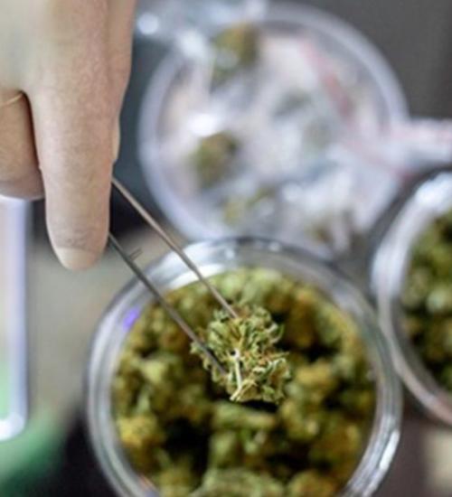 大麻 保存