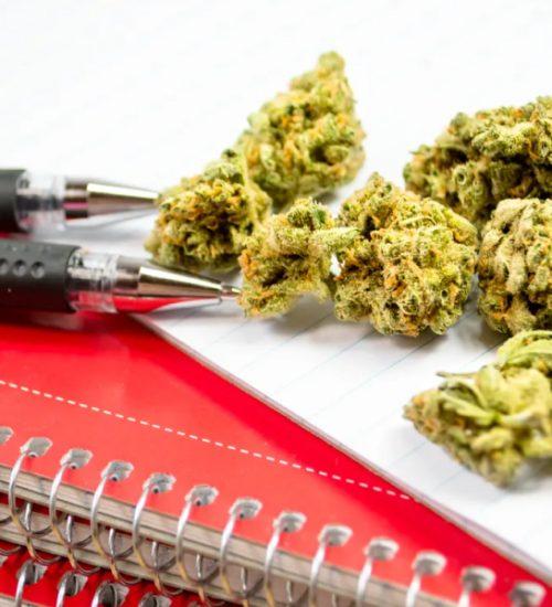 大麻 セミナー