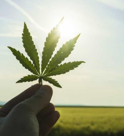 大麻市場 成長